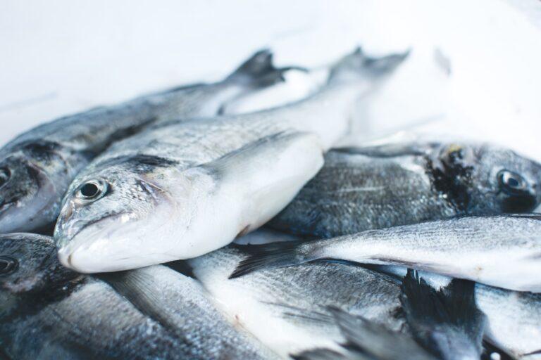 peixe congelado