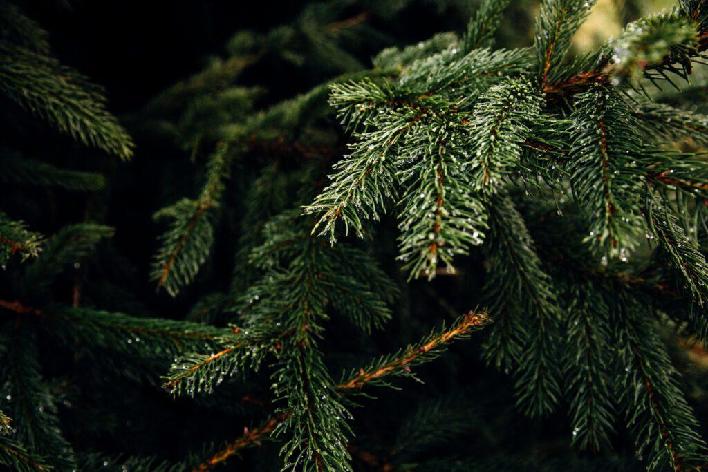 árvore de Natal mais sustentável