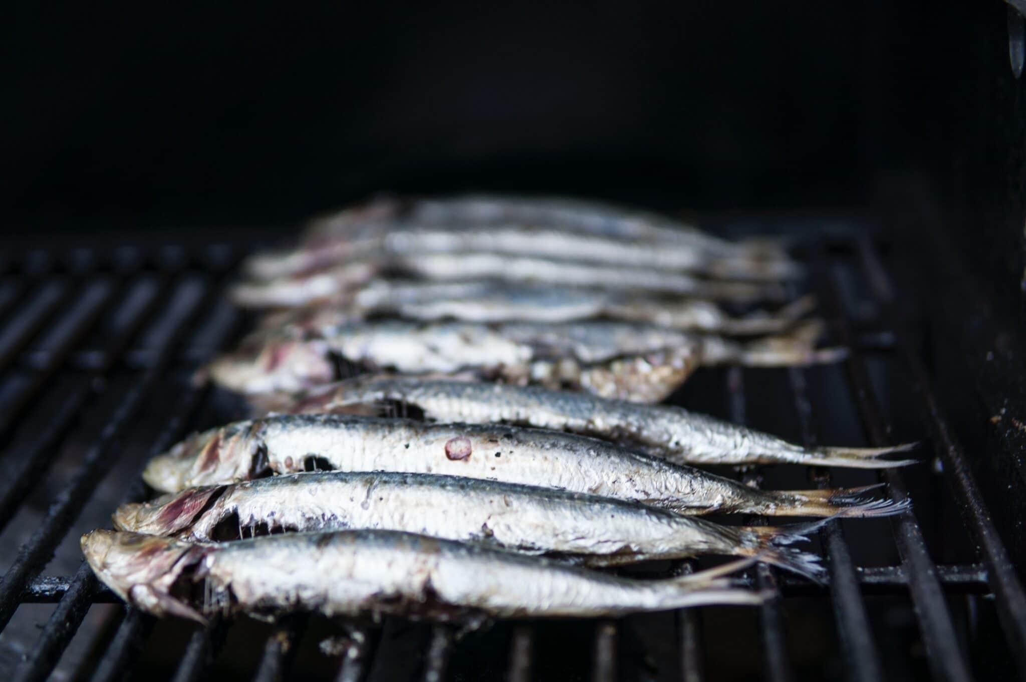 sardinha enlatada